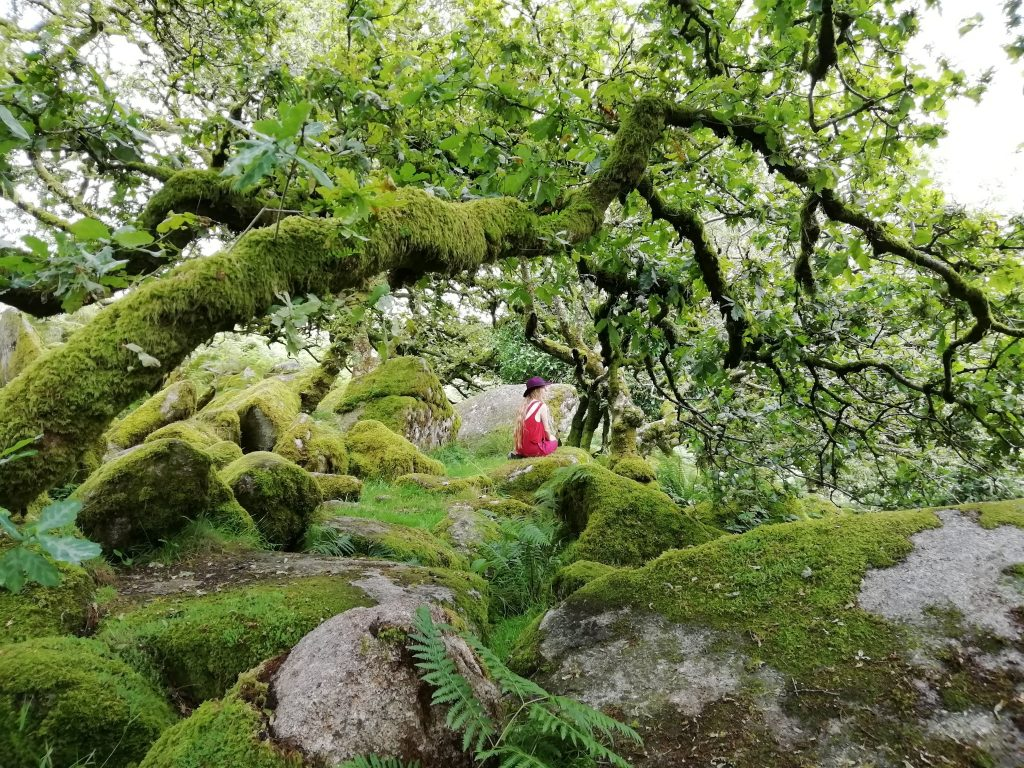 A figure in red sits on a boulder in an ancient woodland
